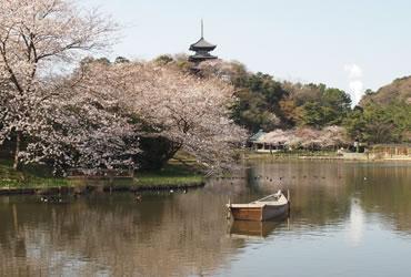 写真:桜の写真