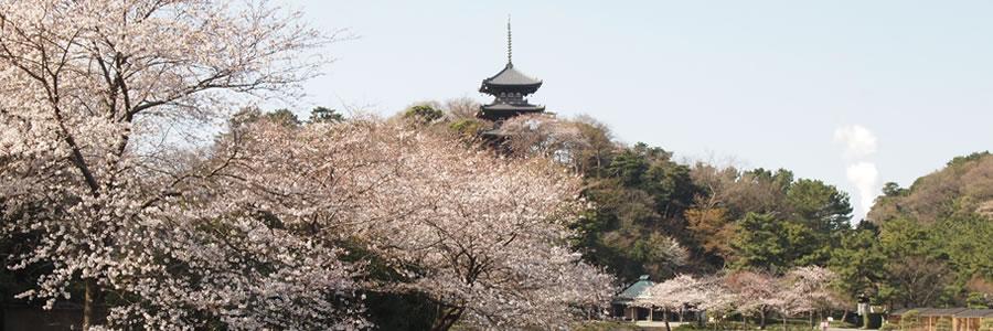 写真:三溪園風景