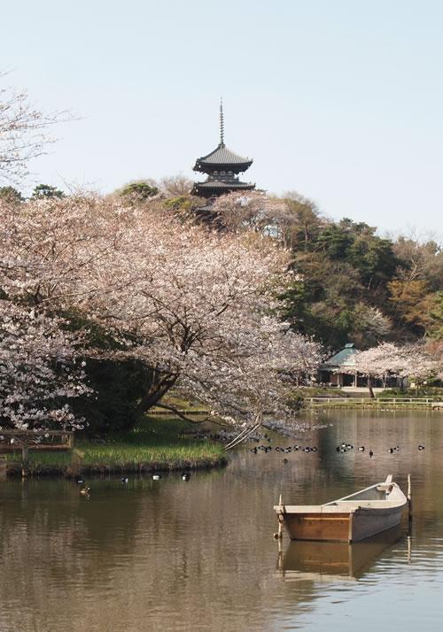 写真:三溪園の風景