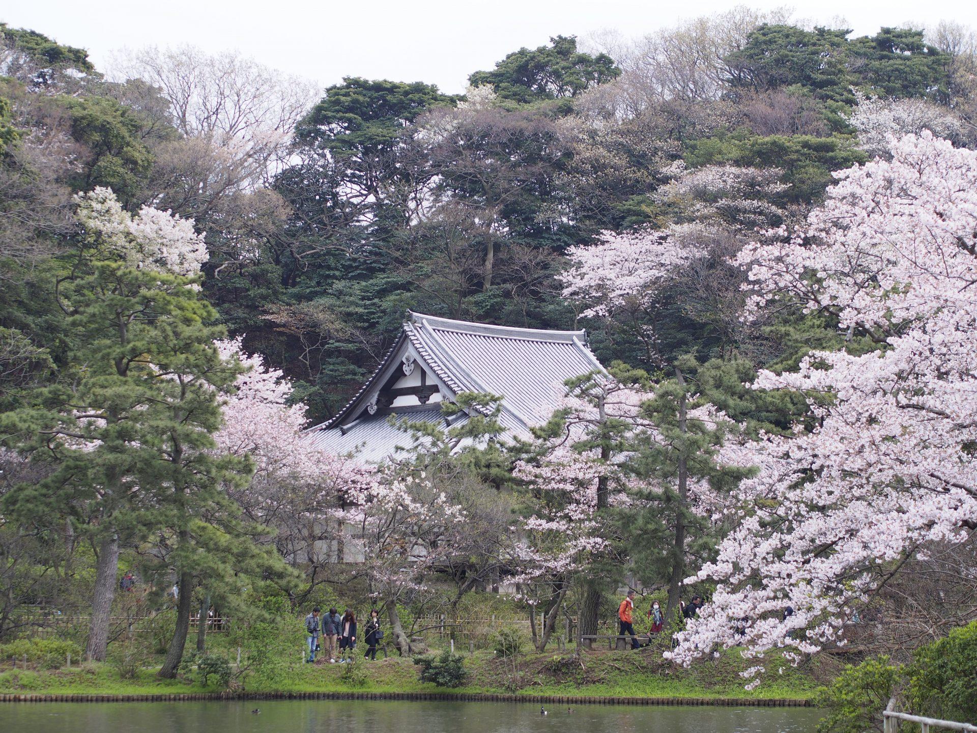 桜の期間は閉園時間を延長